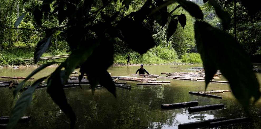 Miembros de la tribu Baduy Luar empujan troncos en un río en una aldea de Baduy Luar en Kanekes, Lebak, provincia de Banten, Indonesia.