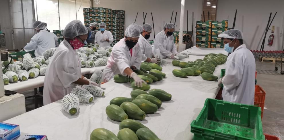 Exportación de papayas