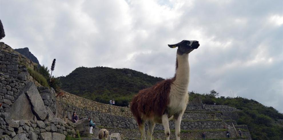 eodosio Huanca, si cabe el mayor experto global en llamas, está sorprendido y