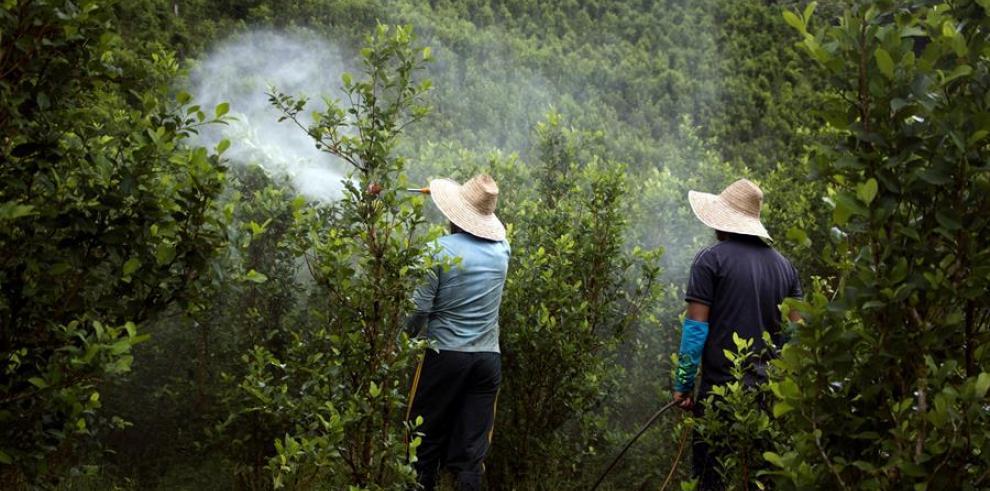 Hombres que fumigan un cultivo de coca en la vereda de La Cuchilla, Nariño