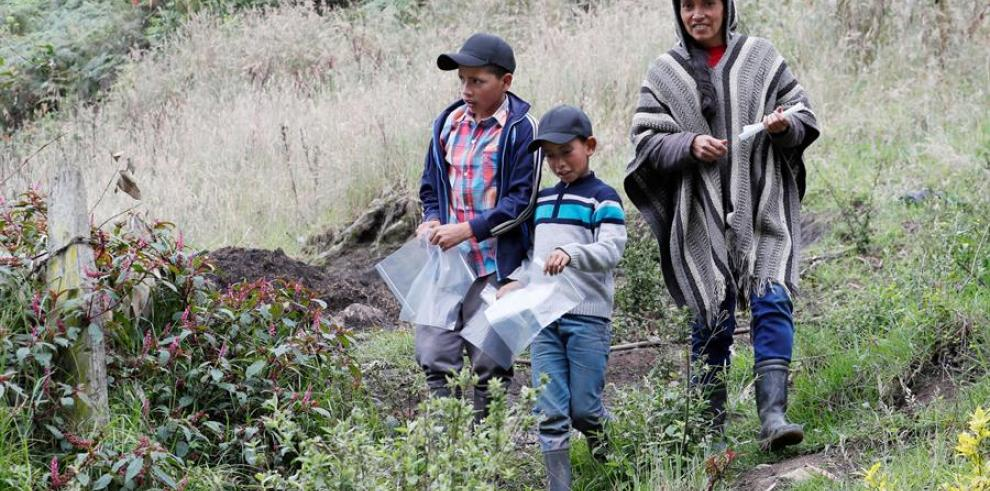 Campesinos colombianos enseñan en YouTube a cultivar en casa por la pandemia