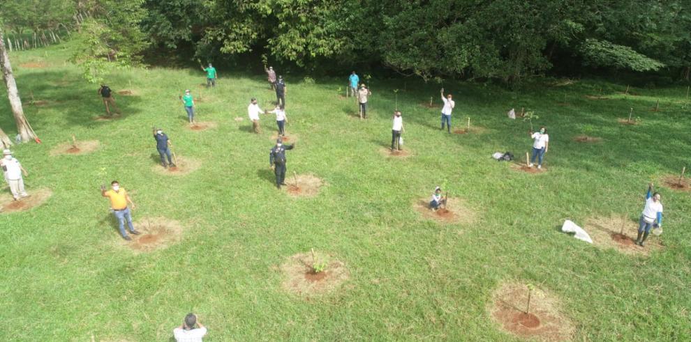 Reforestación en Chiriquí