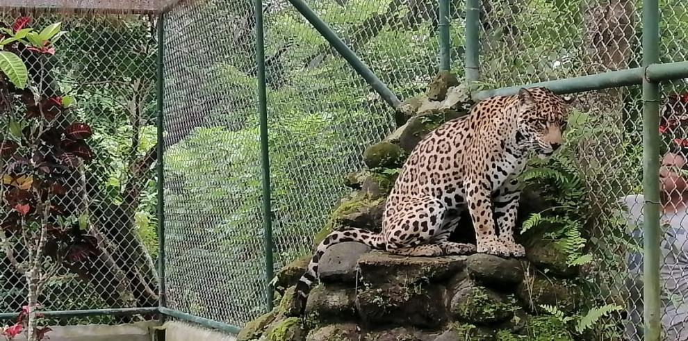 Zoológico El Níspero impactado por la pandemia