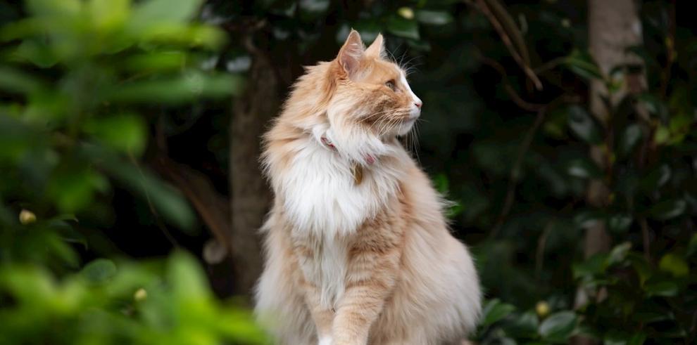 Gato Mittens