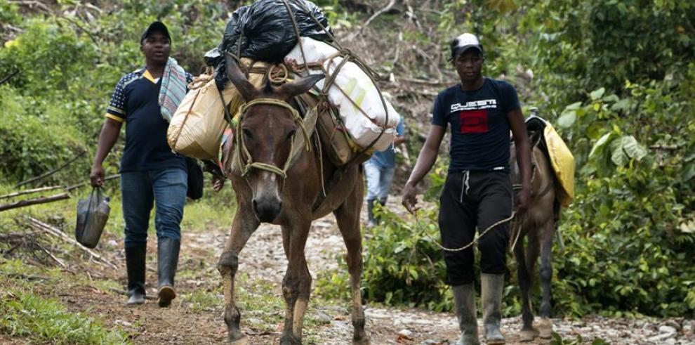 El aumento de la violencia en Colombia afecta la salud de las poblaciones  vulnerables