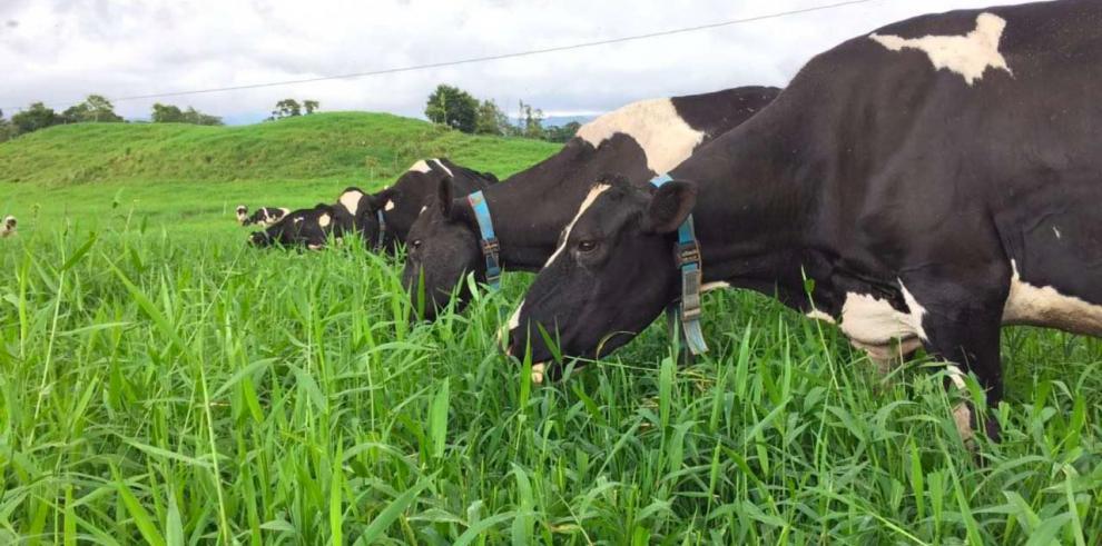Collares inteligentes para detectar el celo en hato bovino