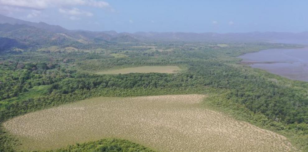 Darién podría presentar ecosistemas de Albinas en Garachiné