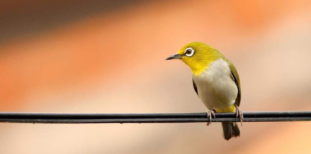 El equipo de investigación recolectó sus cifras reuniendo los datos de casi 1,000 millones de avistamientos de aves registrados en eBird