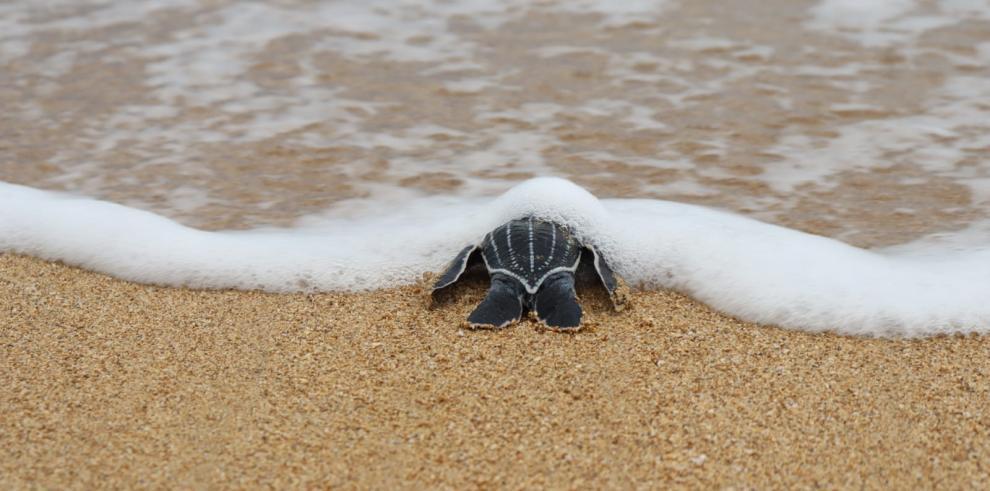 Toma conciencia y apoya la conservación de las tortugas