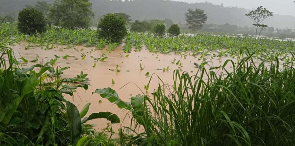 Parcelas de plátano anegadas por la fuerte lluvia en Bocas del Toro