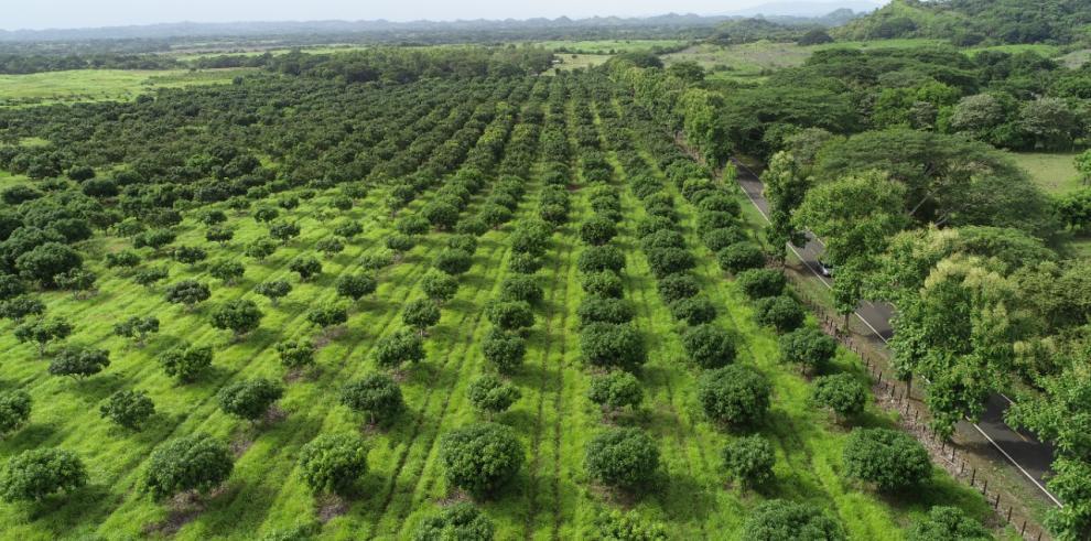 Nuevos bosques secundarios en Panamá