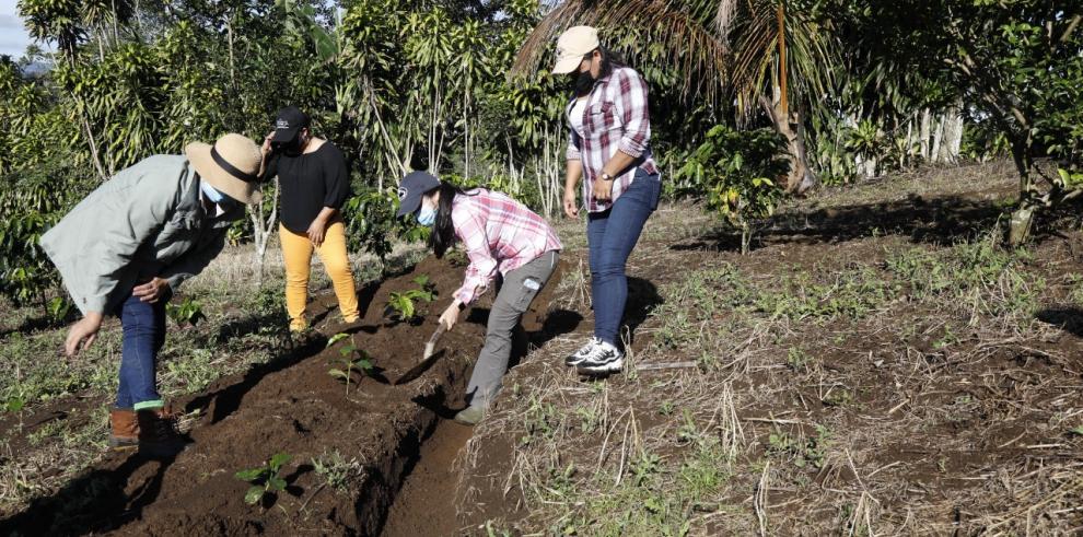 Mujeres en Renacimiento, Chiriquí, cultivan café sensible para combatir el cambio climático.