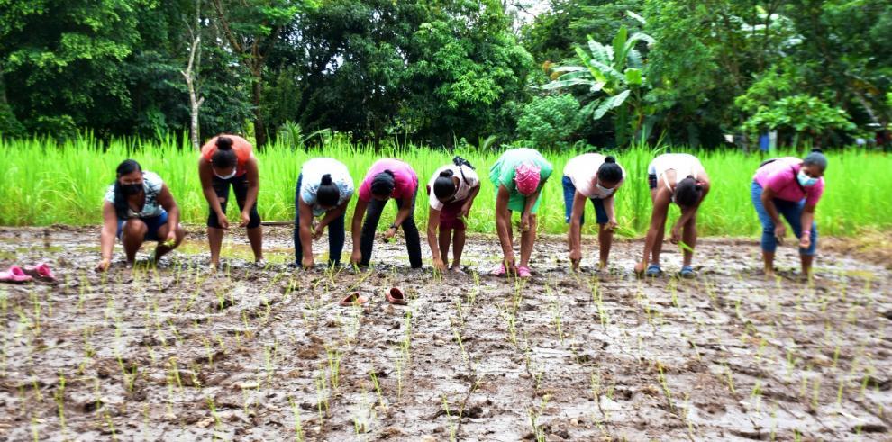 Mujeres aprenden en Coclé sobre agricultura sostenible, MIDES
