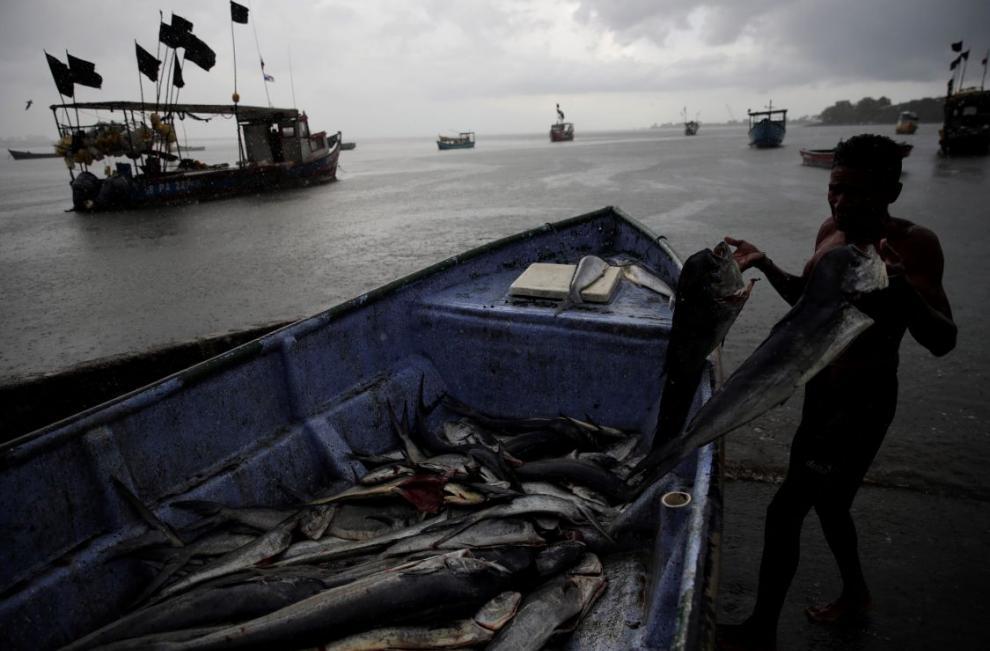 Un pescador desembarca capturas de peces dorado en las costas del barrio del Chorrillo en la bahía de Panamá en el Océano Pacífico.