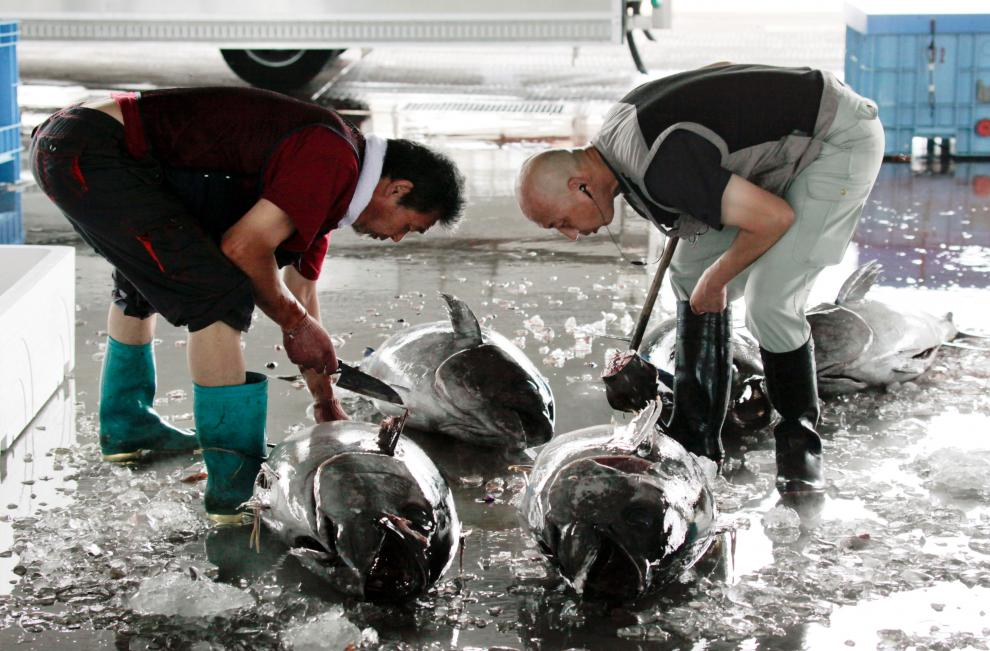 Asentadores comprueban el estado de los atunes capturados en el mercado de pescado en Kesennuma, Japón, el 14 de julio de 2014.