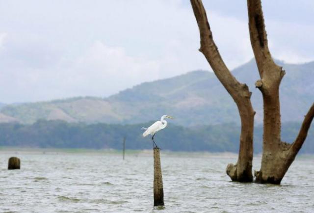 Nivel de agua de Gatún y Alajuela continúan por debajo del promedio, Canal - La Estrella de Panamá